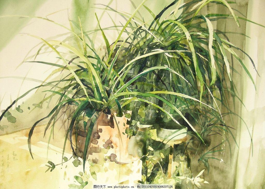 兰花草 美术 绘画 水彩画 花卉 兰花 叶子 花盆 水彩画艺术 水彩画