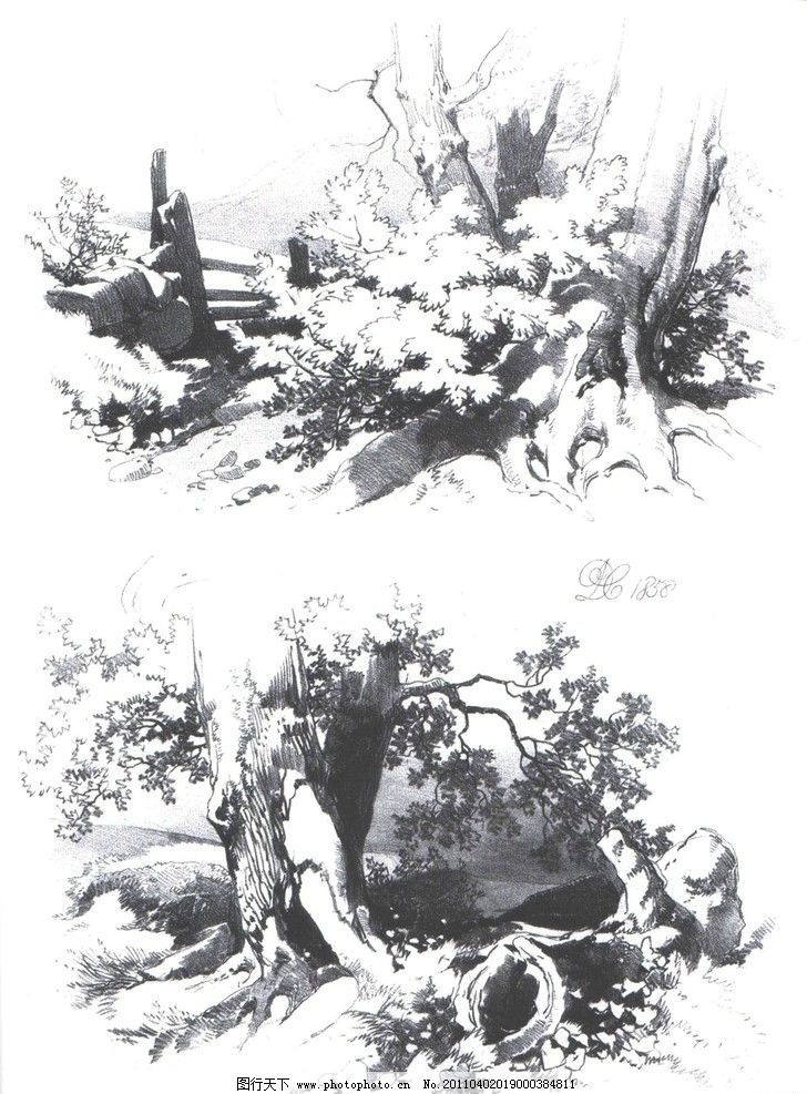 树木素描绘画方法