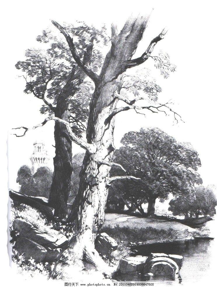 国外经典素描 国外素描 大师范画 范画 树木 植物 树木画法 经典素描
