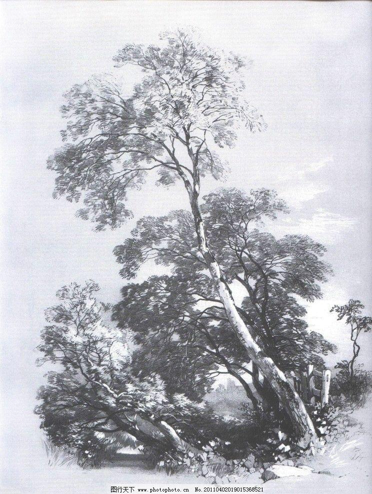 植物树木素描图片