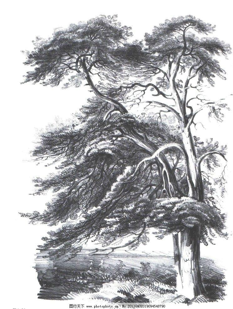 大师作品 国外经典素描 国外素描 大师范画 范画 树木 植物 经典素描