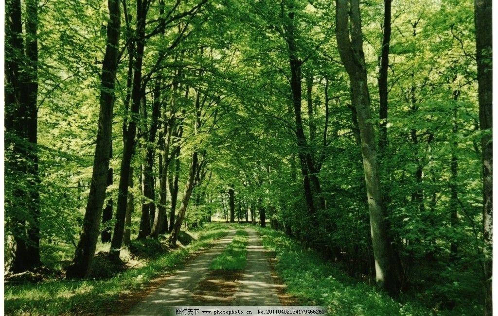林间小道 道路 漫步 花 公园一角 树 摄影 源始森林 绿荫 一缕阳光