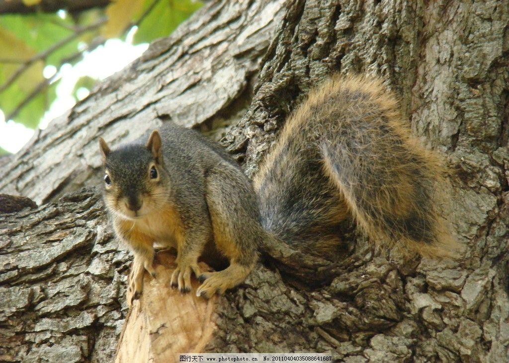 松鼠 动物 树 野生动物 生物世界 摄影 72dpi jpg