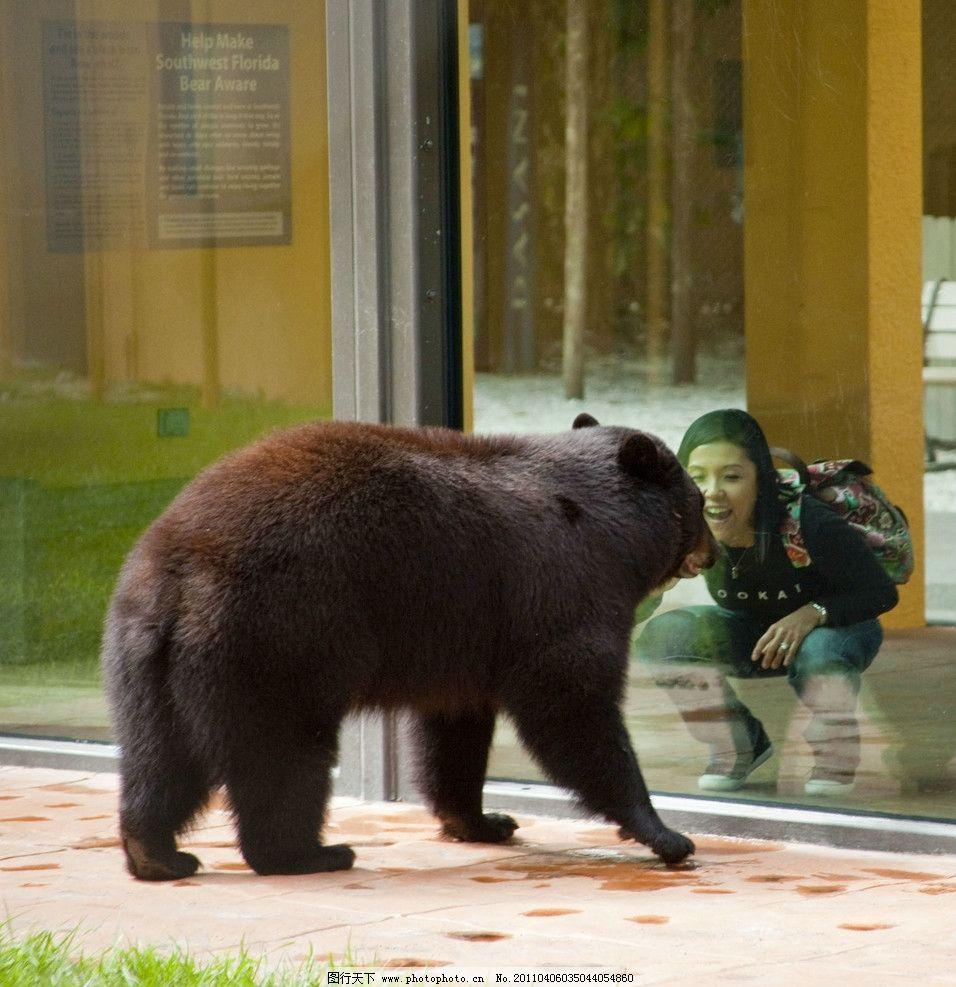 黑熊与人图片