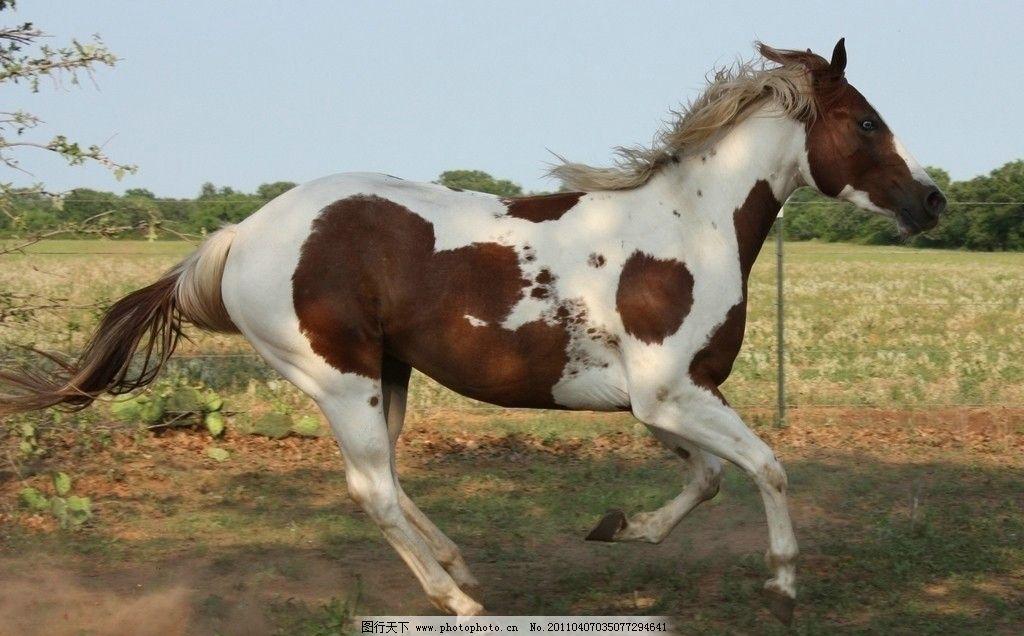 马儿 人 天空 场地 草地 白色的马 树林 奔跑的马儿 远处的树林