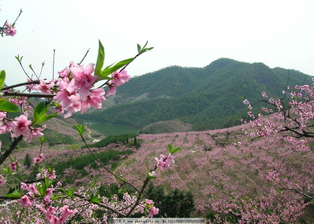 桃花山图片