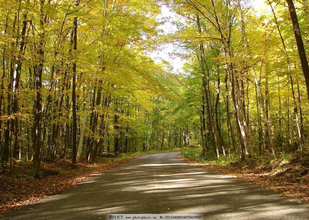 风景壁纸 马路 树林 安静 风景图片 秋天 自然景色 树林图片