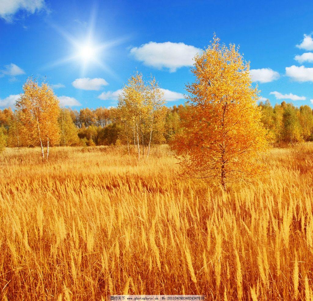 秋日的麦田