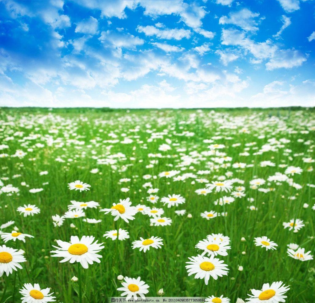 花丛景观手绘黑白