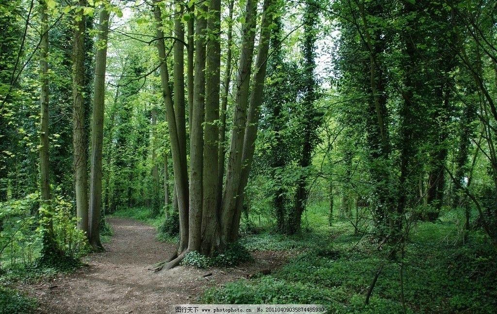 森林小路 自然景观 自然风景 树林小路 树木 国外风景 草地 图库 树木