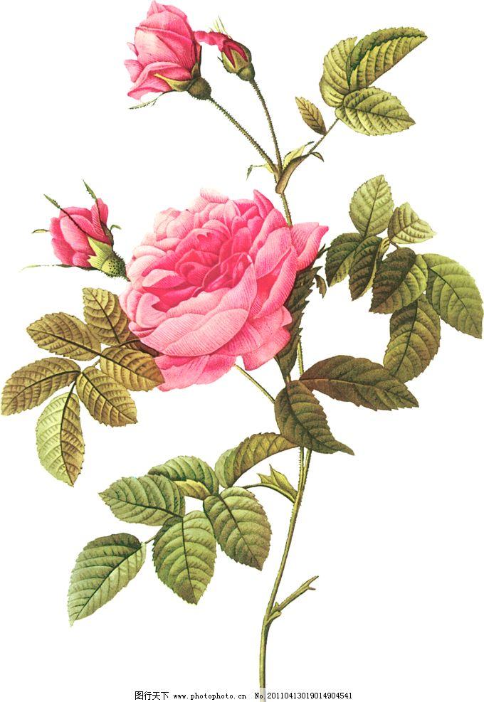 铅笔简单画玫瑰花图片步骤