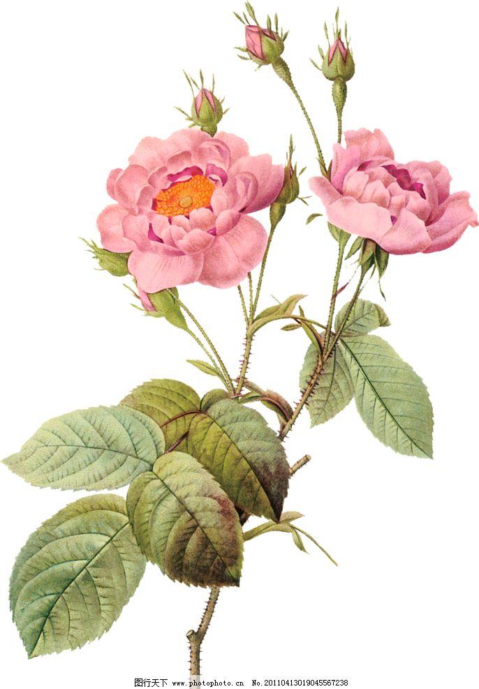 绘画玫瑰步骤图片