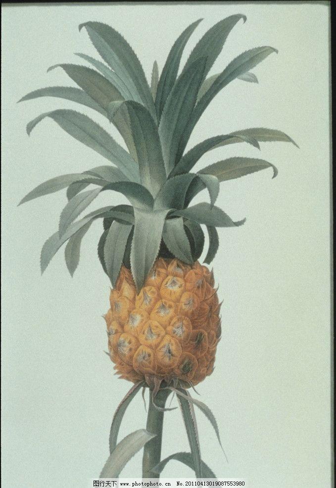 钢笔画菠萝 菠萝 钢笔画 钢笔水彩 水果 油画 水彩画菠萝 绘画书法