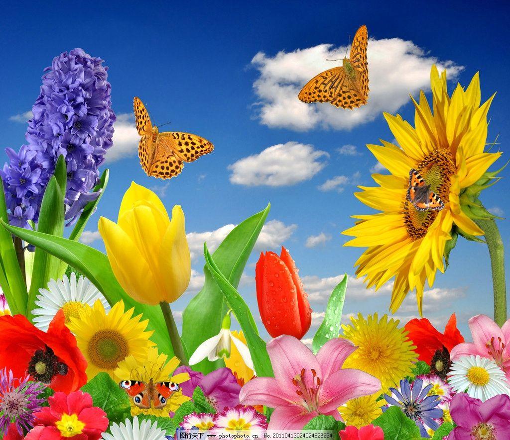 蓝天白云鲜花蝴蝶向日葵 郁金香 自然 清新 舒适 春天风景 春天风光