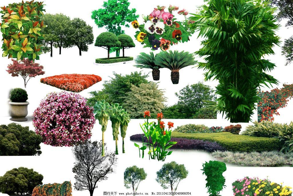 植物素材 配名植物 园林配名素材集 景观植物 园林树 树 花 psd分层