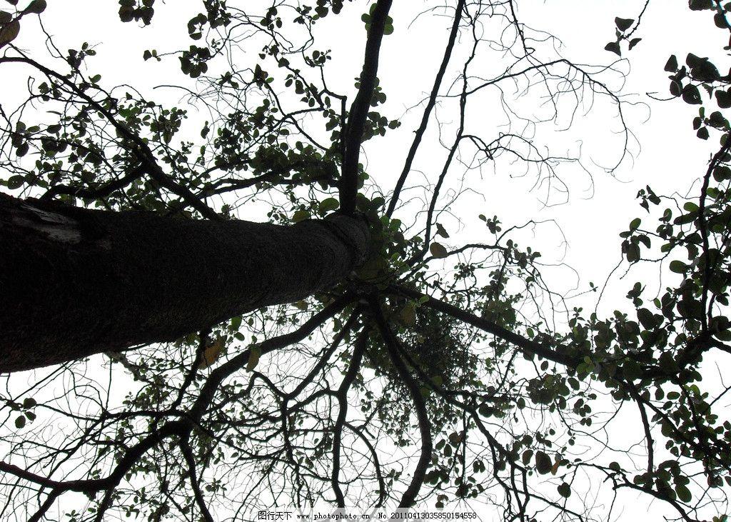 树冠 大树 俯视 树木树叶 生物世界 摄影 96dpi jpg