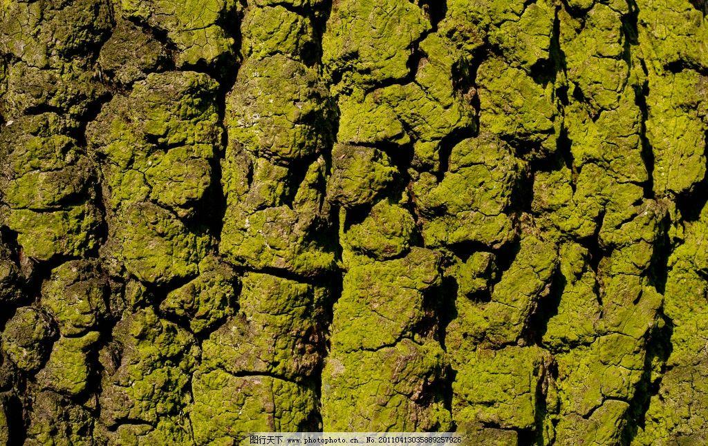 树木树叶  树木树纹高清图片 树纹 树木 树皮 木纹 木板 材质 木头