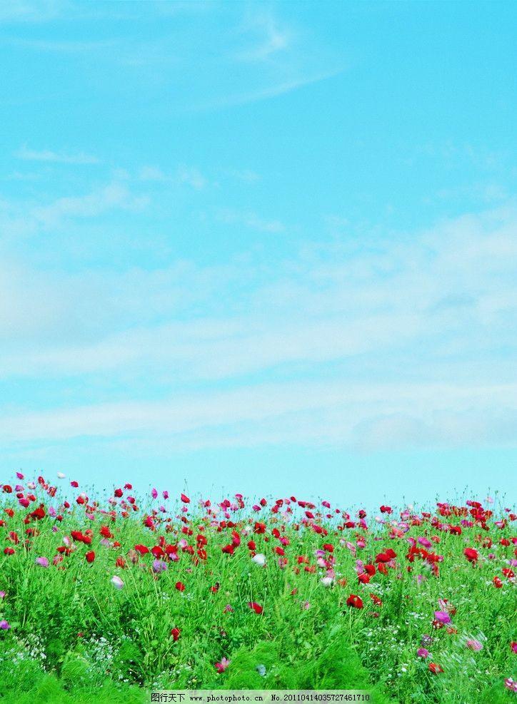 蓝天白云野花 蓝天 白云 野花 红花 绿草 花草 生物世界 摄影 300dpi