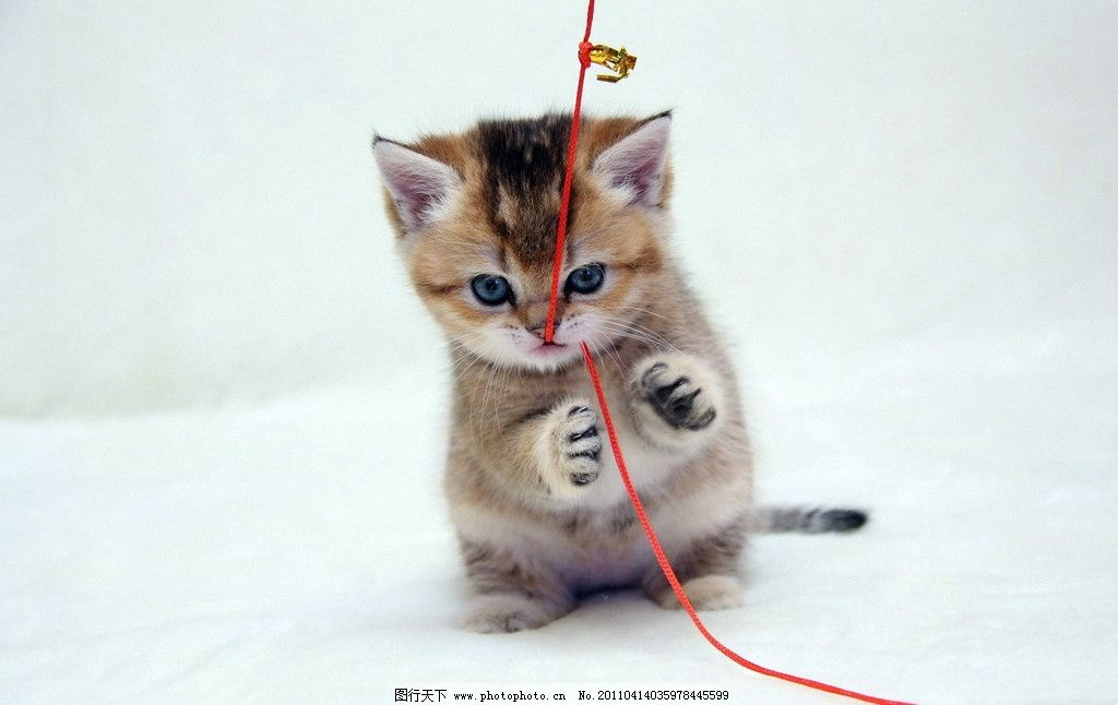 小猫 黄鲲吉他谱