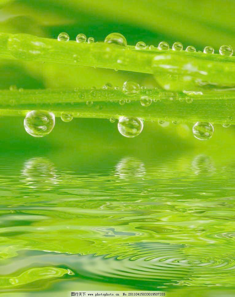 背景 壁纸 绿色 绿叶 设计 矢量 矢量图 树叶 素材 植物 桌面 765_966