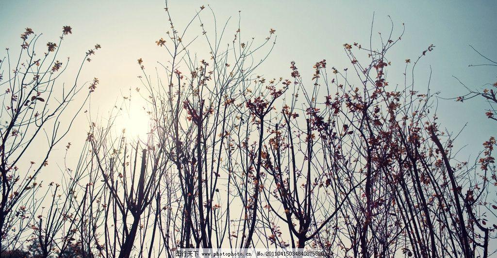 夏天风景 夏天 树枝 阳光 风景 摄影 自然风景 自然景观 240dpi jpg