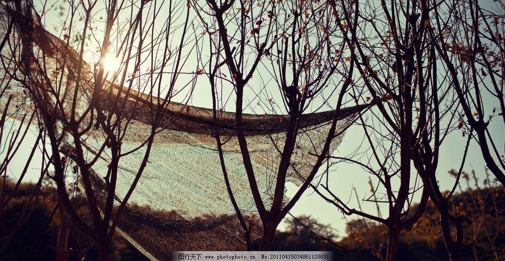 夏季风景 夏天 树枝 阳光 风景 摄影 自然风景 自然景观 240dpi jpg