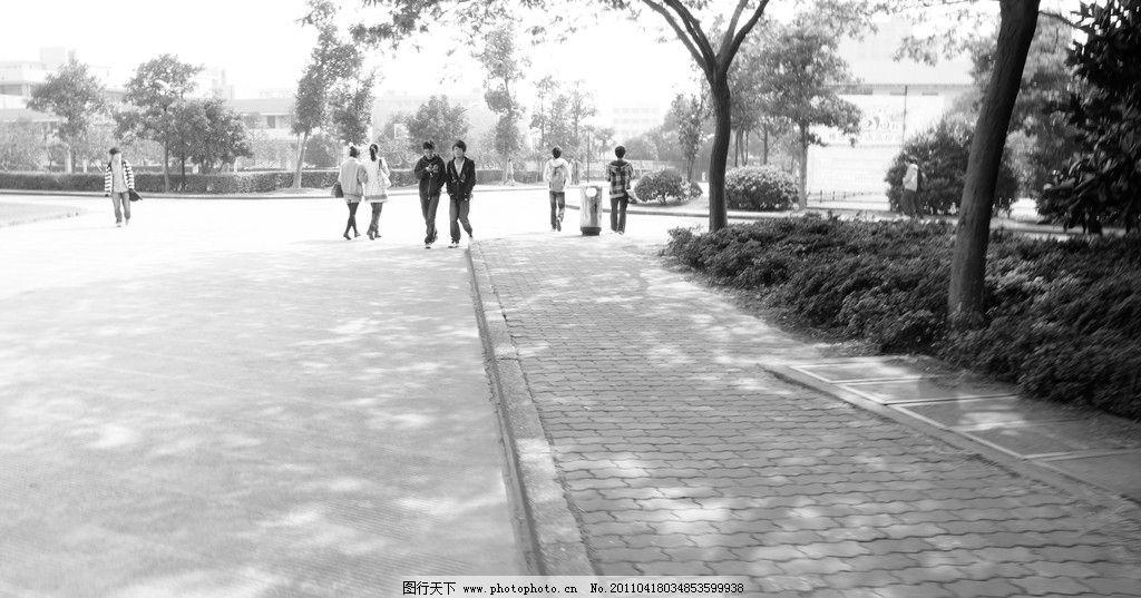 校园林荫道 校园 林荫 黑白 自然风景 自然景观 摄影 350dpi jpg