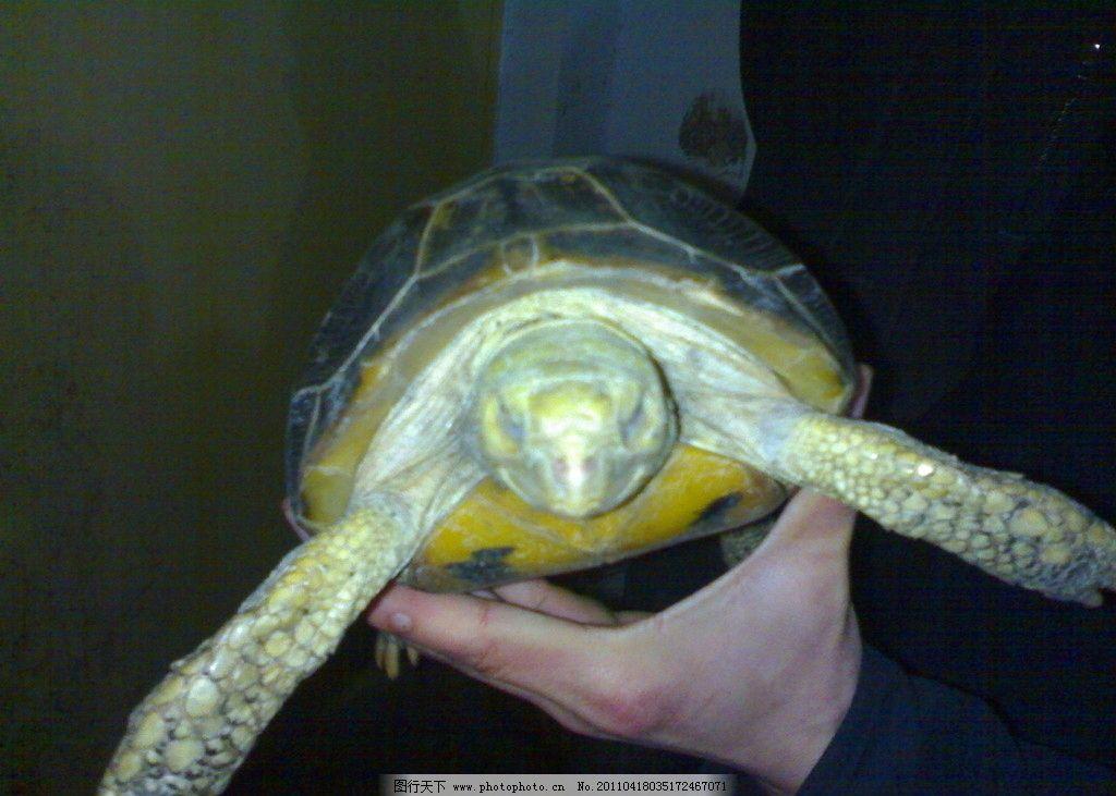 乌龟 海龟 海洋生物 生物世界 摄影
