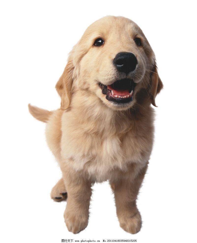可爱动物 狗狗图片