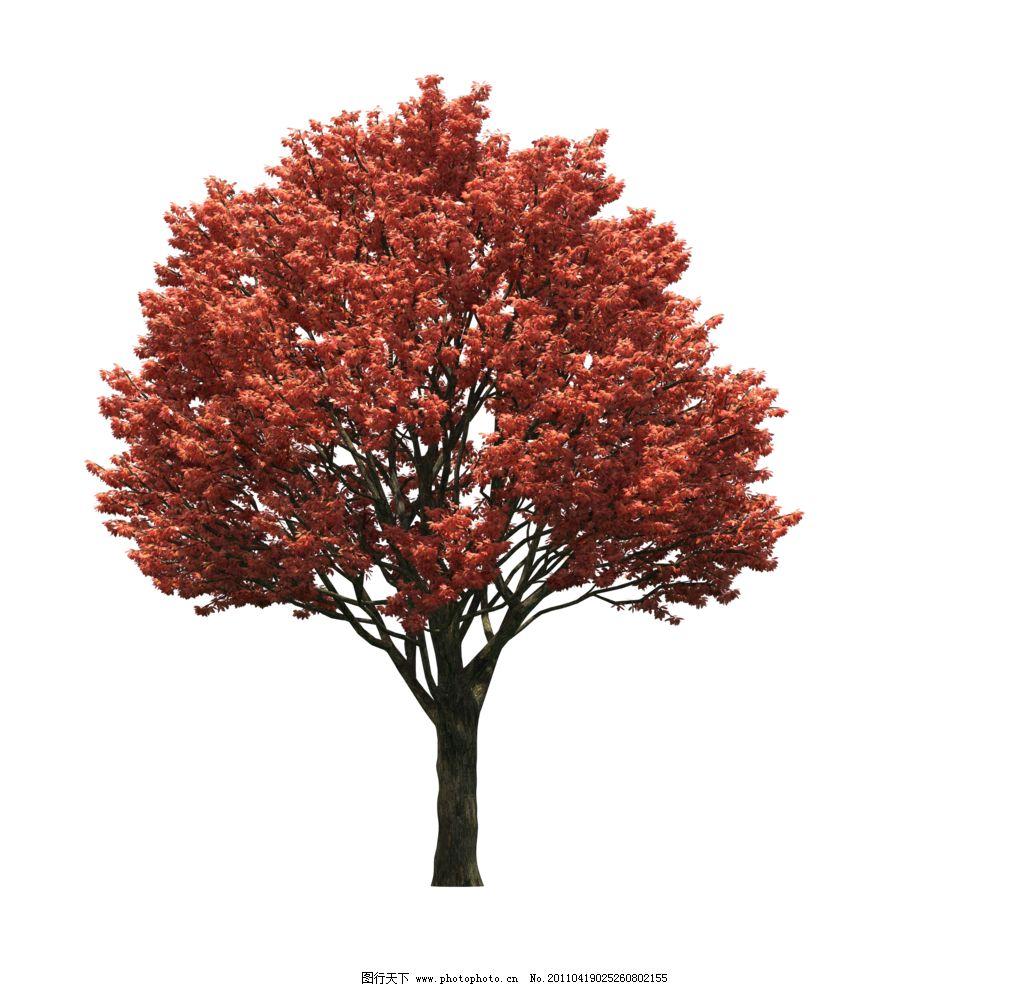 园林树木红叶透明png图片