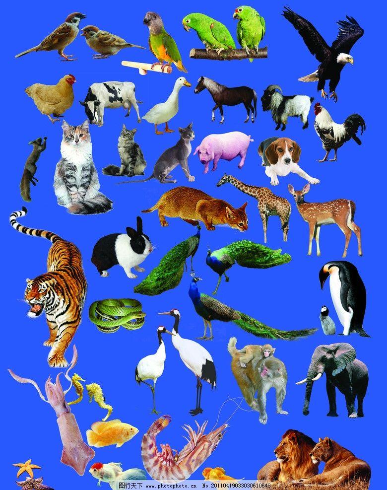 海陆空 高清 动物大集合图片