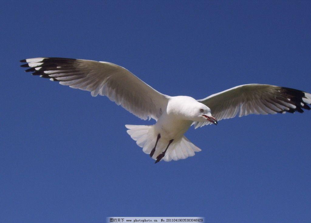 展翅高飞图片
