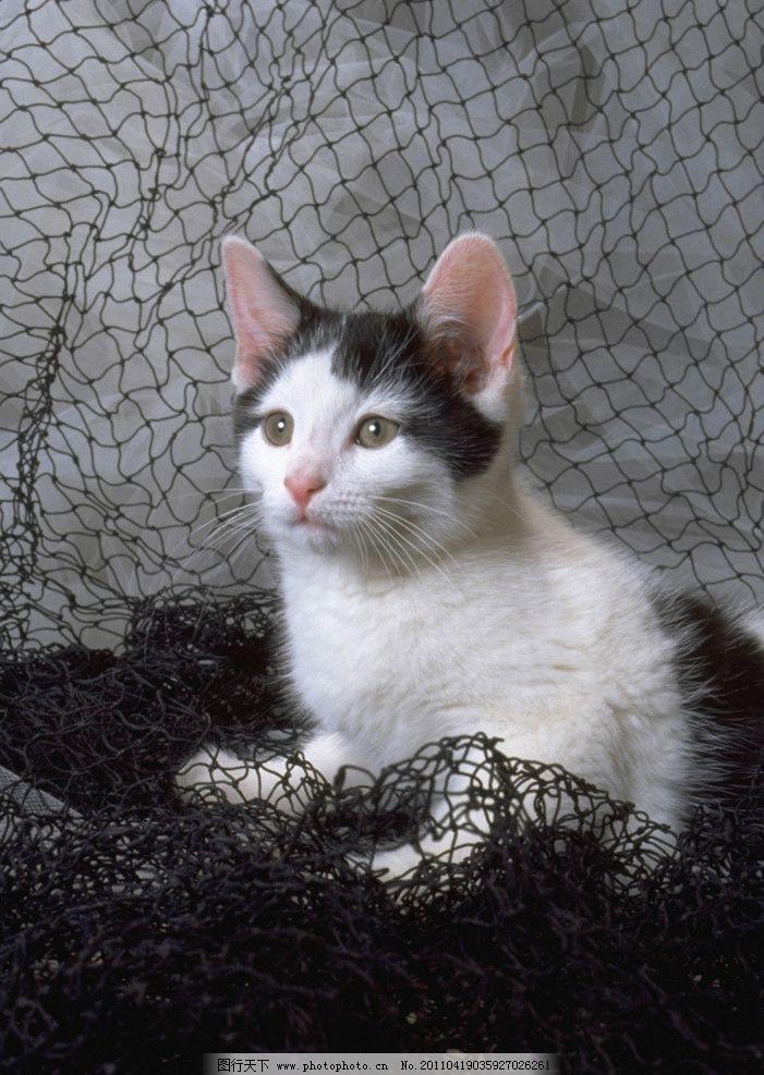 壁纸 动物 猫 猫咪 小猫 桌面 701_987 竖版 竖屏 手机
