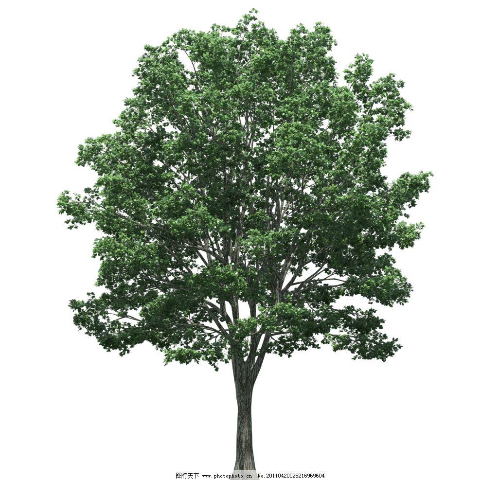 园林绿树树木透明png图片