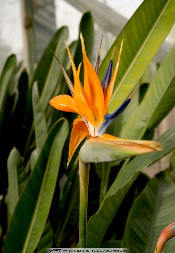 像丹顶鹤 花 四月 植物园 其他 自然景观 摄影 72dpi jpg