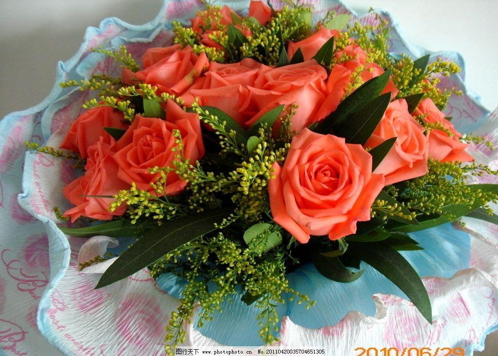 玫瑰 粉黄玫瑰 一束玫瑰 玫瑰花 花朵 红玫瑰 满天星 花草 生物世界图片