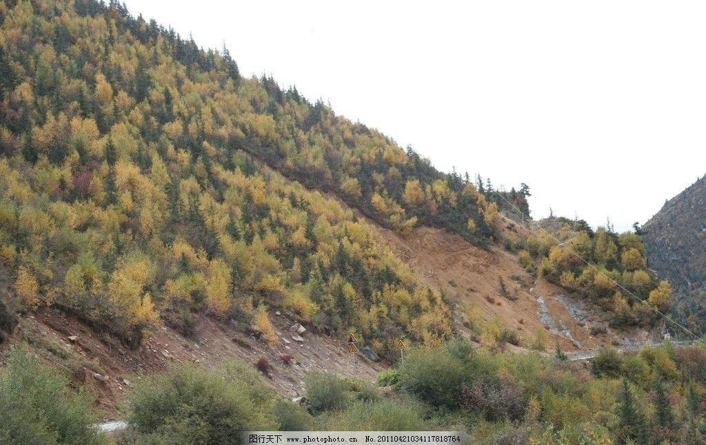 山坡 丘陵 树林 绿化 松树 天空 小树 自然风景 旅游摄影 摄影 72dpi