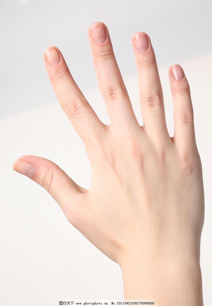 各种手势 五 第五 第五手势 手背 手部动作 手指 手部特写 人物手势