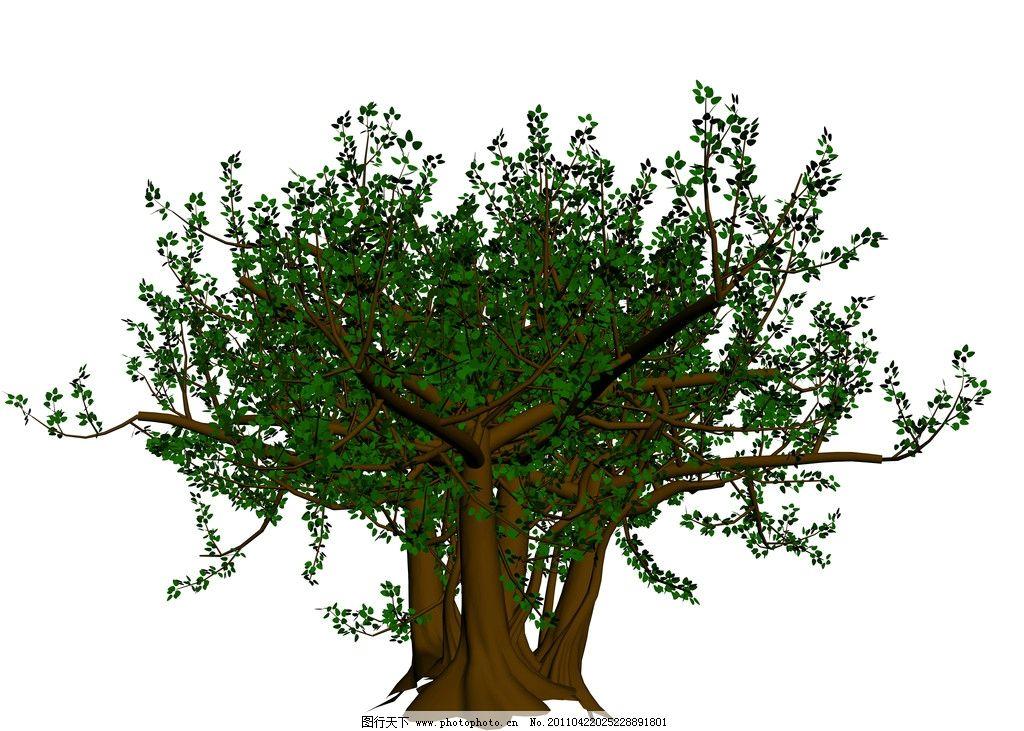 菩提树图片_树木树叶_生物世界_图行天下图库