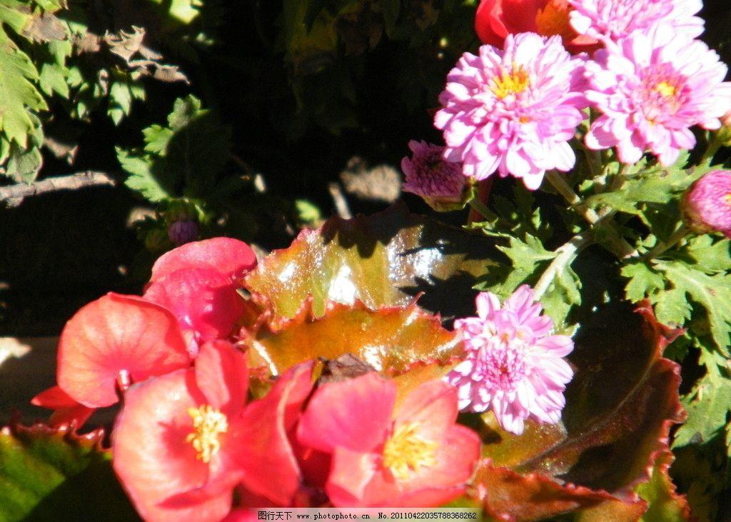 废布利用手工制作花卉