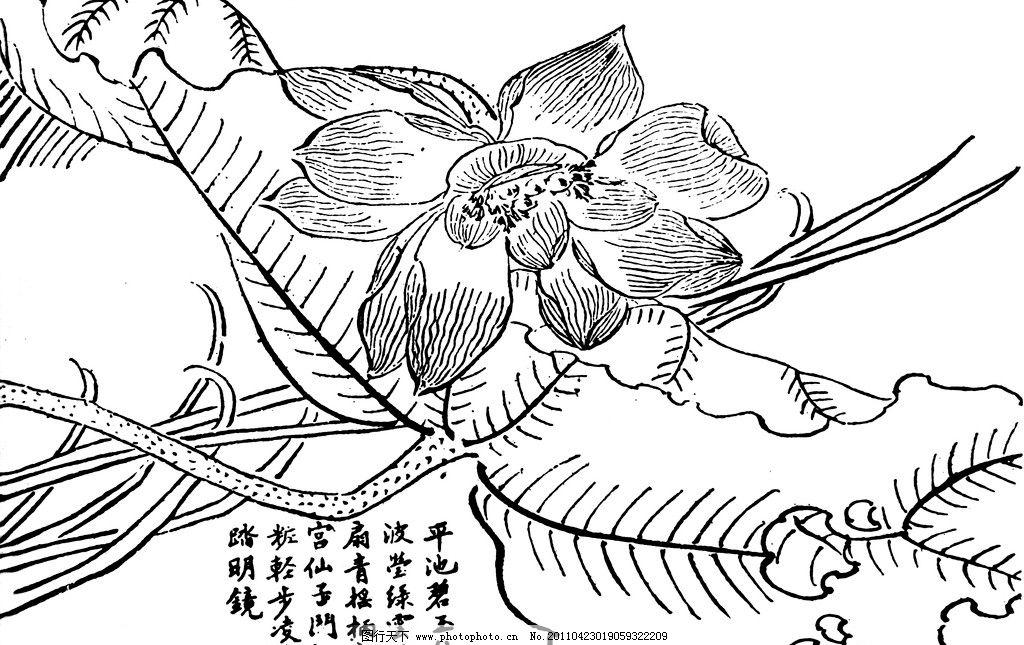 荷花 国画 莲花 莲叶 荷叶 野草 文字 白描 绘画 绘画书法 文化艺术