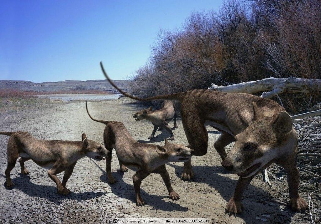 熊犬家庭 史前怪兽 3万年前 野生动物 生物世界 摄影 96dpi jpg