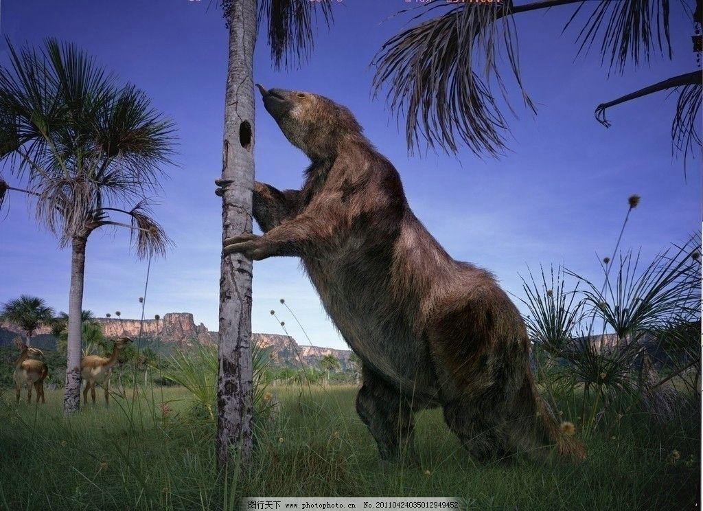 大地獭 史前怪兽 3万年前 野生动物 生物世界 摄影 96dpi jpg