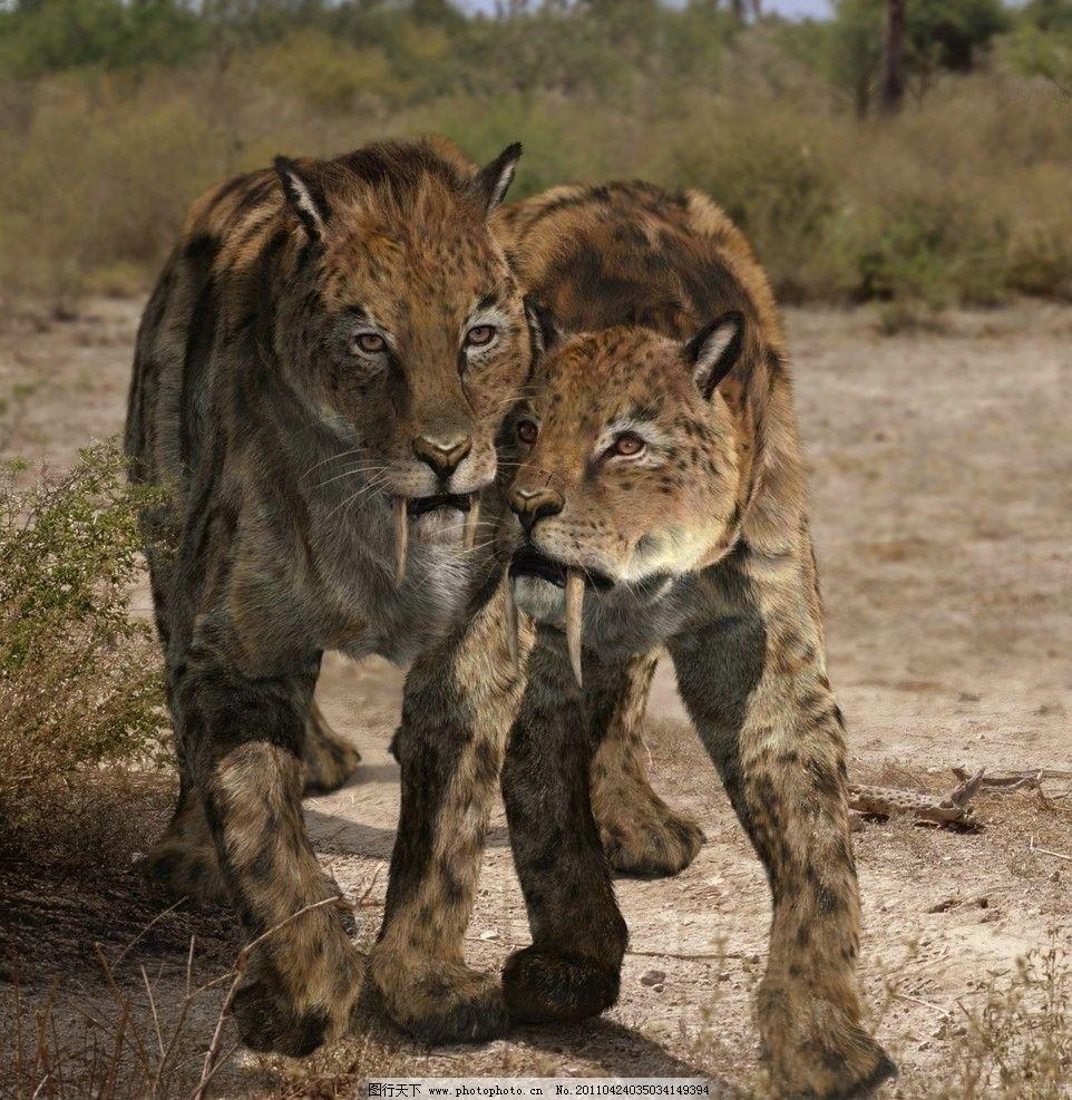 剑齿虎兄弟 史前怪兽 3万年前 野生动物 生物世界 摄影 96dpi jpg