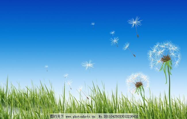 绿草地上飞舞的蒲公英