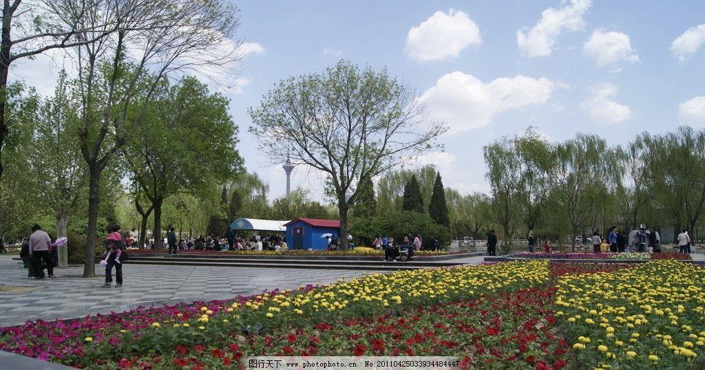 动物园的花池 天津 水上公园 游客 电视塔 树木 鲜花 蓝天 白云