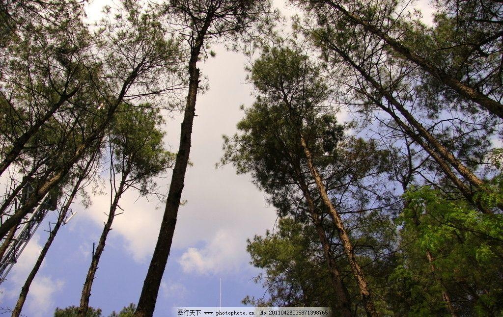 仰视的树林图片