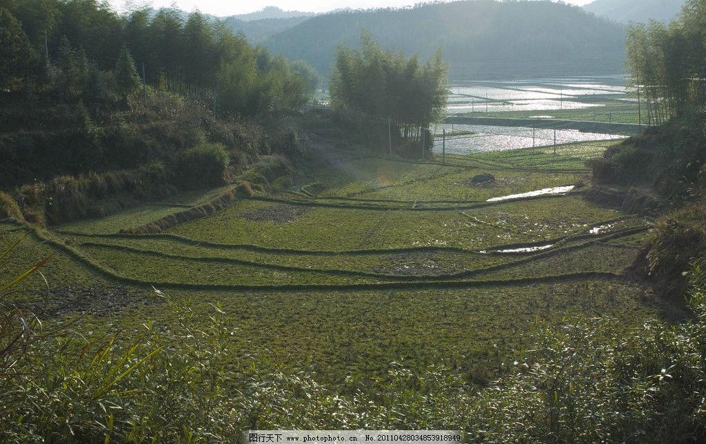山岰里的小梯田 田野 竹林 竹子 风景 乡土 原生态 摄影