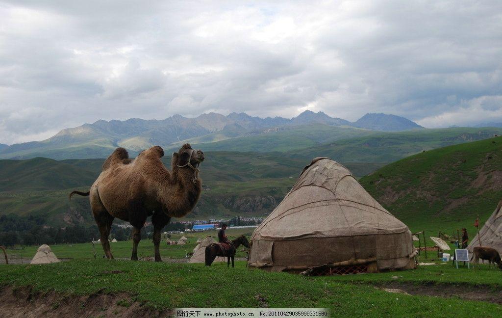 新疆风景 骆驼 马 骑马的人 蒙古包 花草 草地 山 蓝天 白云