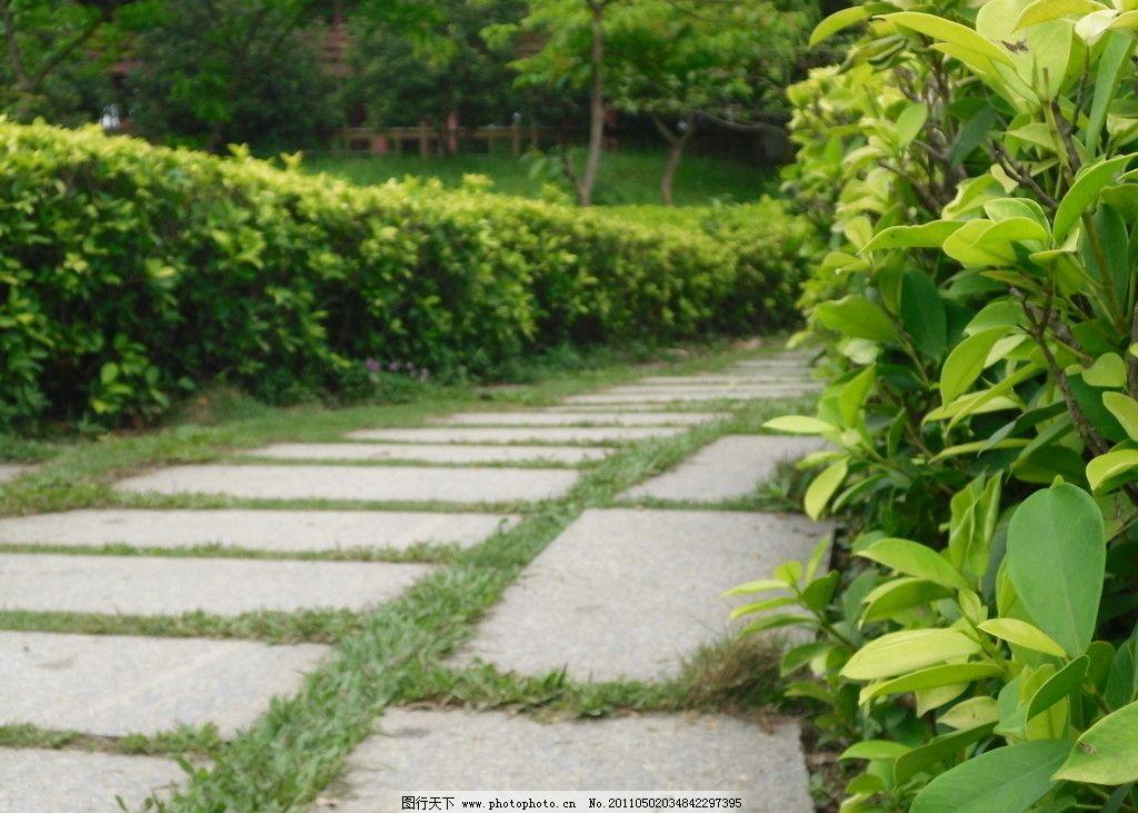 曲径绿叶 冬青树图片